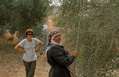 ISM volontaire et femmes palestiniennes travaillant dans un verger olive. Photo libre de droits