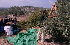 ISM volunteers in an olive grove, Palestine stock photography