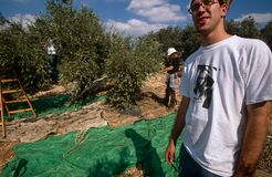 ISM volunteers in an olive grove, Palestine Stock Image
