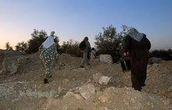 ISM volunteers and Palestinian workers in an olive grove, Palestine. Royalty Free Stock Photo