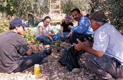 ISM volunteers taking a break in an olive grove. Royalty Free Stock Image