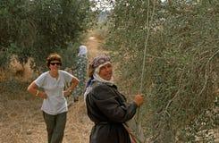 ISMO voluntario y mujeres palestinas que trabajan en una arboleda verde oliva. Foto de archivo libre de regalías