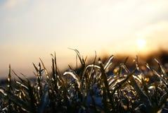 Isnatur/gräs som täckas med is Arkivfoton