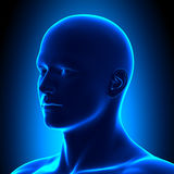 Голова анатомии - Iso осмотрите деталь - голубая концепция Стоковые Изображения RF