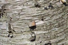 Isoalted-Foto einer Barke eines Baums Lizenzfreies Stockbild