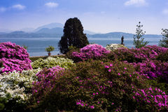 Isola Bella, Lago Maggiore, Italy. Exotic flowers set on the Borromean Island the sumptuous Baroque palace, and luxuriant Italian garden; Isola Bella is a lived stock photos