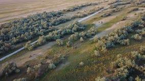 Isola Biryuchiy della fauna selvatica Rilevamento aereo stock footage