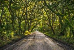 Isola Carolina Oak Tree Tunnel del sud di Edisto vicino allo Sc di Charleston fotografia stock