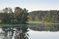 Isola con i pini su un fiume del Nord calmo del Minnesota Fotografia Stock