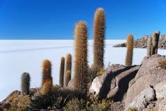 Isola con il cactus salar de uyuni Immagini Stock