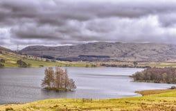 Isola degli alberi in lago scozzese Freuchie Fotografie Stock Libere da Diritti