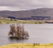 Isola degli alberi in lago scozzese Freuchie Fotografia Stock