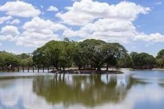 Isola degli alberi in Sukhothai Fotografia Stock