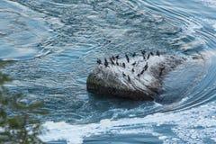 Isola dei cormorani Immagine Stock Libera da Diritti