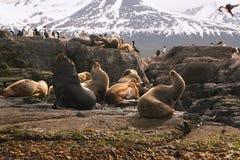 Isola dei leoni marini Fotografia Stock Libera da Diritti