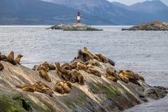 Isola dei leoni marini e faro - Manica del cane da lepre, Ushuaia, Argentina Fotografia Stock