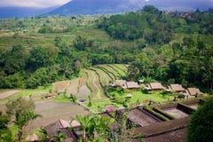Isola del Bali Immagini Stock