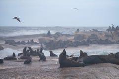 Isola del Duiker vicino alla baia di Hout, Cape Town Fotografie Stock