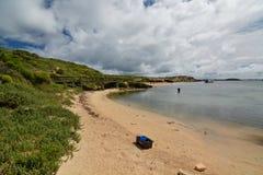 Isola del pinguino Parco marino delle isole di Shoalwater Rockingham Australia occidentale Fotografie Stock