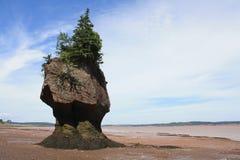 Isola del POT della pianta fotografia stock