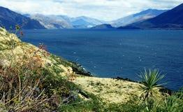 Isola del sud, Nuova Zelanda Immagini Stock Libere da Diritti