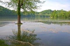 Isola dell'albero fotografia stock