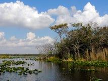 Isola dell'albero dei terreni paludosi Fotografie Stock Libere da Diritti