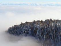 Isola dell'albero di abete in nebbia di inverno Fotografia Stock
