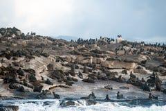 Isola della guarnizione in baia falsa, Sudafrica immagine stock libera da diritti