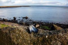 Isola della linea costiera di Skye Immagine Stock Libera da Diritti