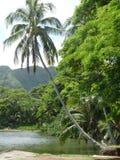 Isola della noce di cocco fotografie stock