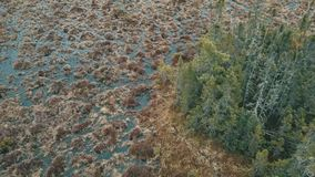 Isola della palude dell'albero stock footage