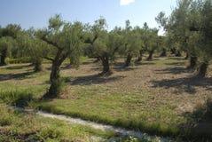 Isola della Zacinto in Grecia immagine stock libera da diritti