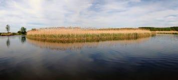 Isola delle canne nelle acque calme di Rosie Fotografia Stock Libera da Diritti