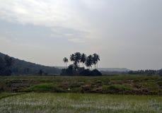 Isola delle palme Fotografie Stock Libere da Diritti