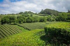 Isola di Açores l'isola verde Fotografia Stock Libera da Diritti