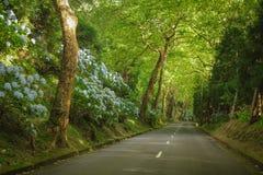 Isola di Açores l'isola verde Fotografia Stock
