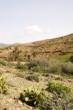 Isola di Canarie Fotografia Stock