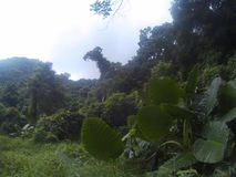 Isola di Catba fotografia stock