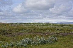 Isola di estate fotografia stock libera da diritti