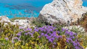 Isola di Favignana, Trapani, Sicilia - il Mediterraneo sfrega la destra della flora sopra il mare del turchese, con i rosmarini e fotografia stock libera da diritti