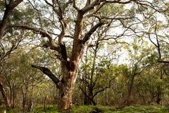 Isola di Fraser delle foreste della giungla, Australia Immagini Stock