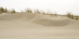 Isola di frisone di Spiekeroog Germania della riserva naturale Fotografia Stock Libera da Diritti