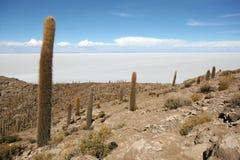 Isola di Incahuasi nella metà degli appartamenti del sale di Uyuni Fotografia Stock Libera da Diritti