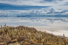 Isola di Incahuasi, Salar de Uyuni, Bolivia Fotografie Stock Libere da Diritti
