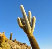 Isola di Incahuasi. Salar de Uyuni. La Bolivia. Fotografia Stock