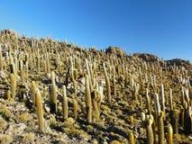 Isola di Incahuasi. Salar de Uyuni. La Bolivia. Immagini Stock