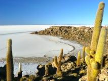Isola di Incahuasi. Salar de Uyuni. La Bolivia. Immagini Stock Libere da Diritti