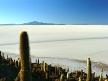 Isola di Incahuasi. Salar de Uyuni. La Bolivia. Fotografie Stock