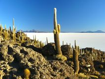 Isola di Incahuasi. Salar de Uyuni. La Bolivia. Immagine Stock